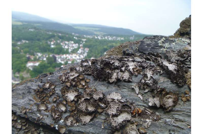 Genome reveals that lichens can produce different climate-specific natural substances