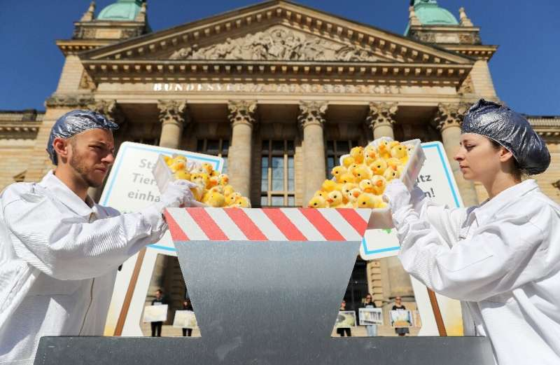 German animal rights activists throw toy chicks into a fake shredding machine to protest the killing of male chicks
