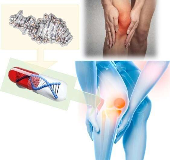 Getting you moving again: A possible new treatment for joint issues