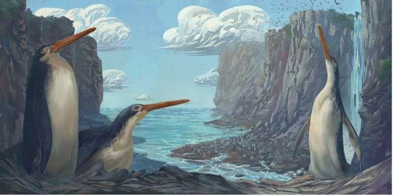 Giant Waikato penguin: school kids discover new species