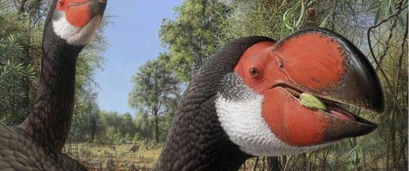 Giant fossil's 'bird-brain'