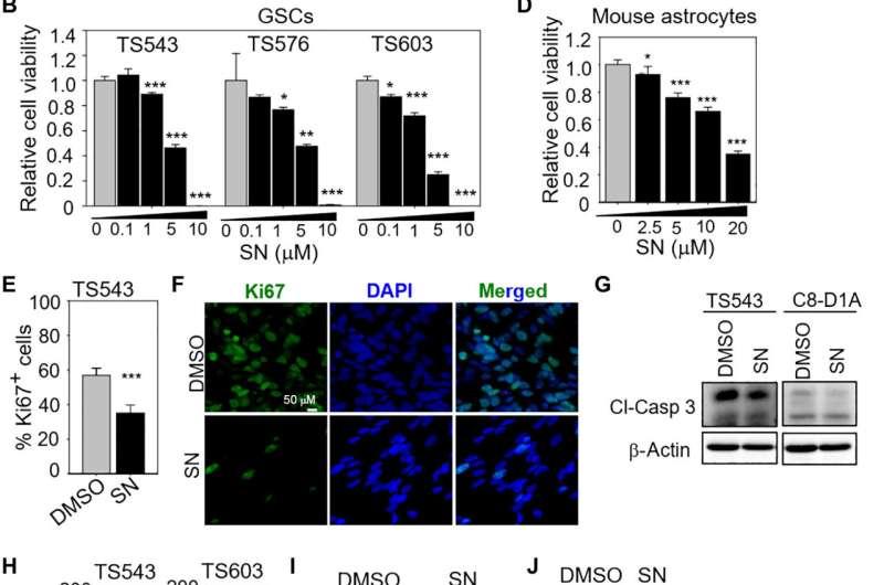 Glioblastoma dependent on biotin distribution