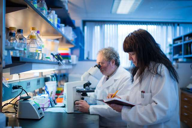 Glioma subtype may hold the secret to the success of immunotherapies