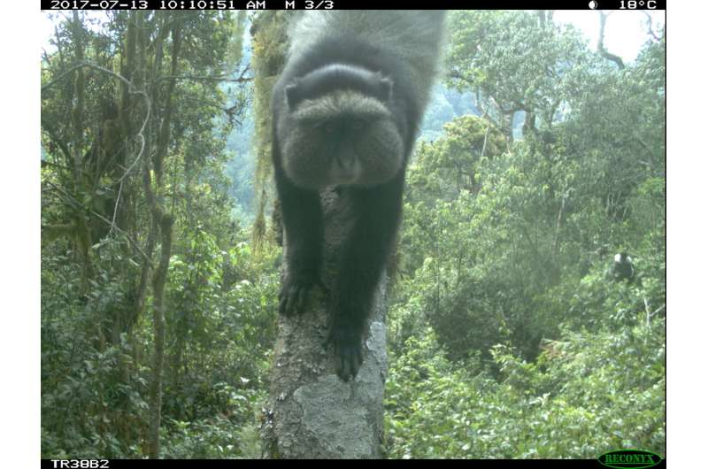 Global team of wildlife researchers furthers study of elusive, tree-dwelling animals
