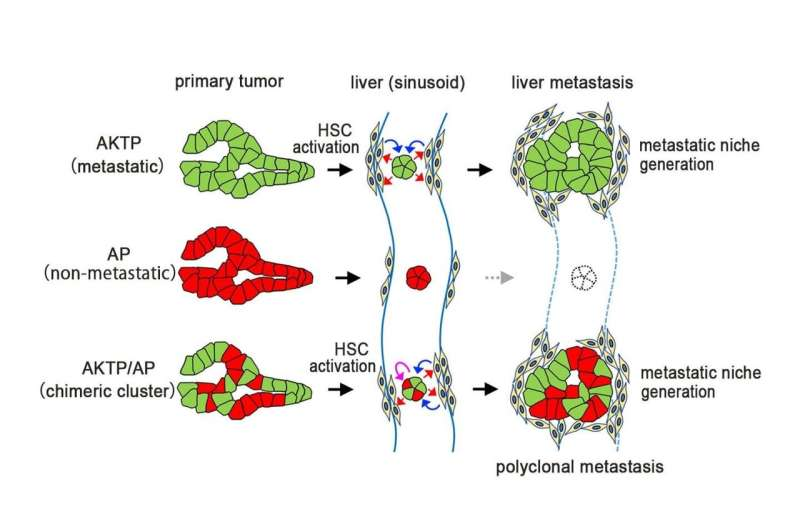 Going the distance--insights into how cancer cells spread