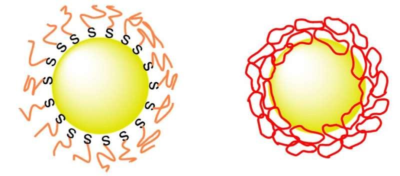 金纳米颗粒通过在其上戴环而更稳定