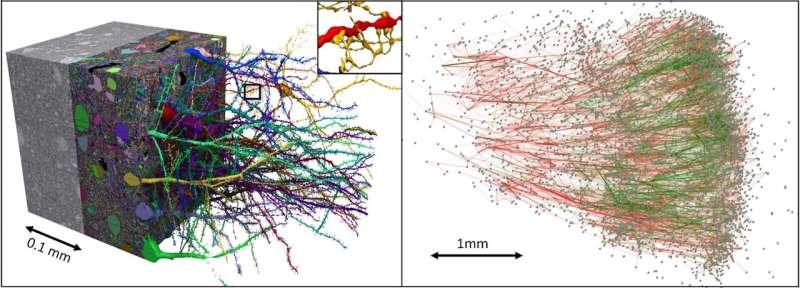 Google teams up with Harvard to map small bit of human cortex