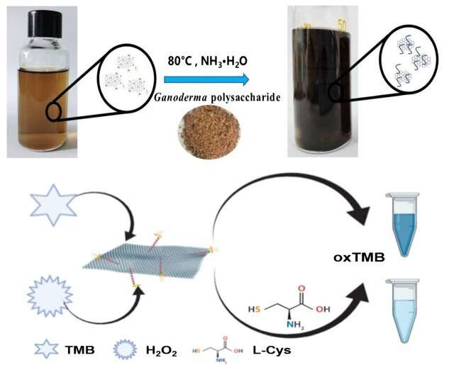 Graphene-based nanozyme helps to detect L-cysteine in serum