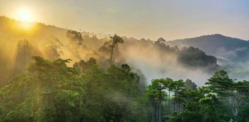 Ecologizar el planeta: no podemos simplemente plantar árboles, tenemos que restaurar los bosques