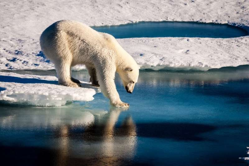 Greenland is experiencing a record heatwave, forcing polar bears to wander further for food.
