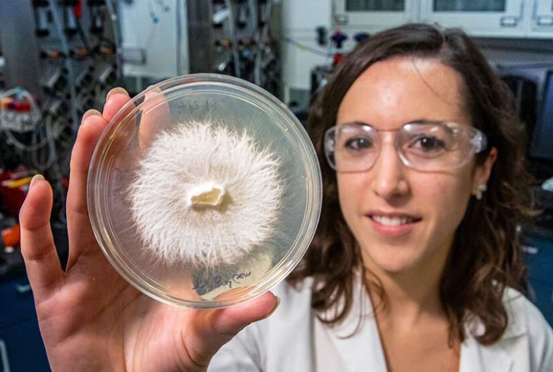 Groundbreaking Research into White-Rot Fungi Proves Its Value in Carbon Sequestration from Lignin