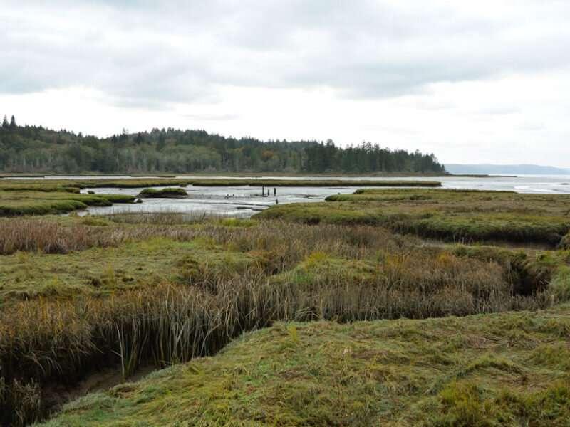 Half of U.S. tidal marsh areas vulnerable to rising seas