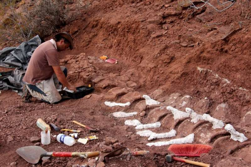 Handout picture released on January 20, 2021 by the CTyS-UNLaM Science Outreach Agency showing a palaeontologist during an excav