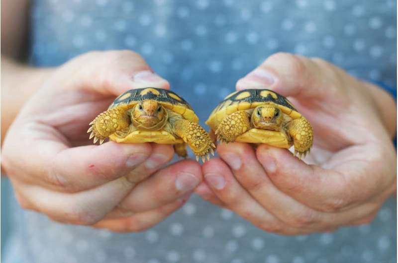 Health status of vulnerable gopher tortoises revealed in Southeastern Florida