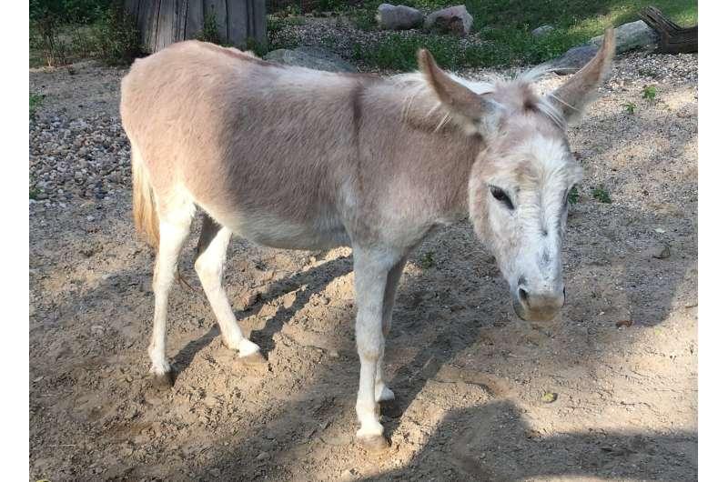 Hepatitis B: lo que la gente puede aprender de los burros