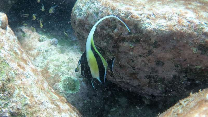 High CO2 to slow tropical fish move to cooler waters
