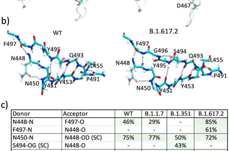 Highly contagious coronavirus variant's mutation weakens antibody effectiveness