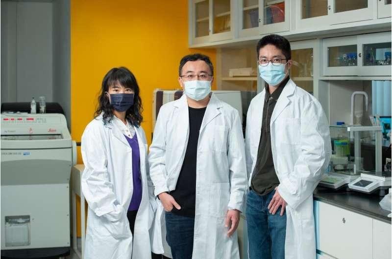 HKBU develops dual-targeting drug for EBV-related cancers
