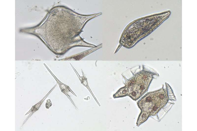 HKUST research shows growing dominance of diatom algae in the Pearl River estuary and paves the way for future study on diatom b
