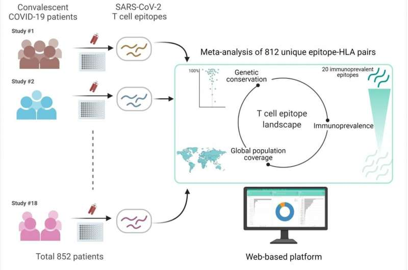 HKUST's meta-analysis shows SARS-CoV-2 variants unlikely to affect T cell responses