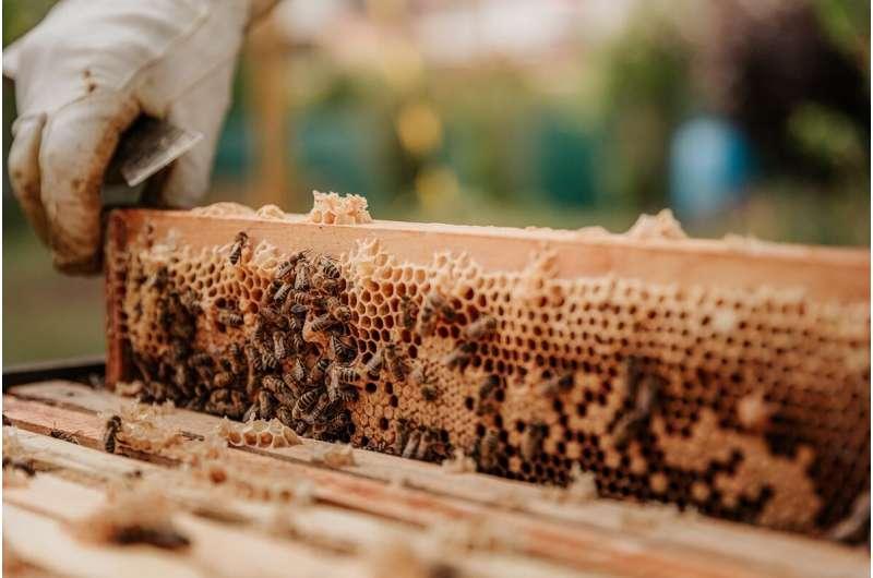 abejas de miel