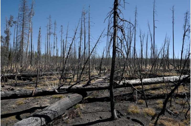 Cómo el cambio climático y los incendios están dando forma a los bosques del futuro