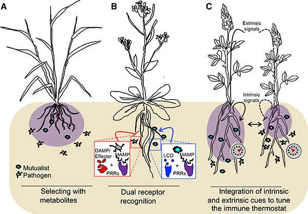 How do plants balance microbial friends and foes?