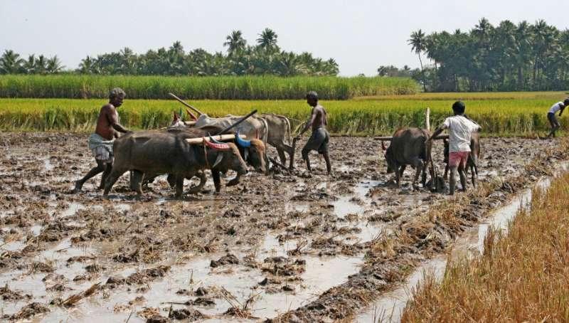 Cómo las emisiones de la producción de alimentos están dañando la salud