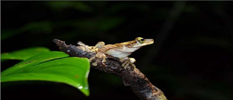 How habitat and reproduction influence the diversity and evolution of frogs