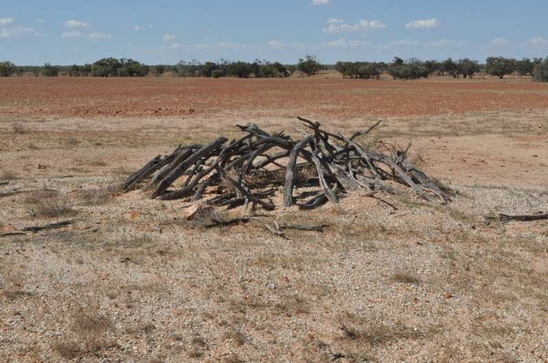 How our new archaeological research investigates Dark Emu's idea of Aboriginal 'agriculture' and villages