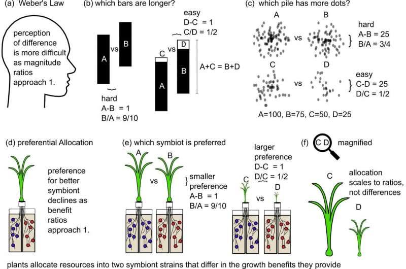 How plants compensate symbiotic microbes