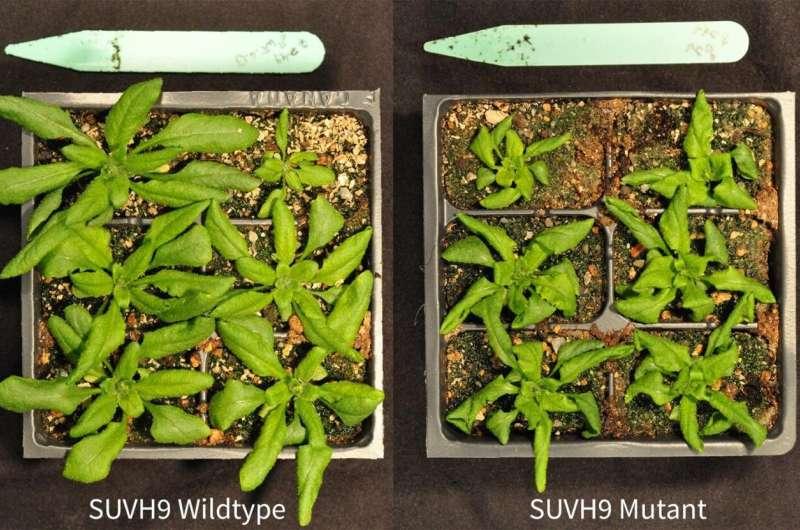 How plants leave behind their parents' genomic baggage