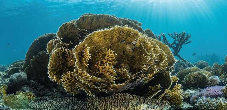 How reef-building corals got their bones