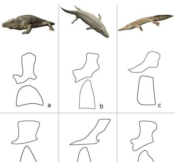 How the amphibians got their vertebrae