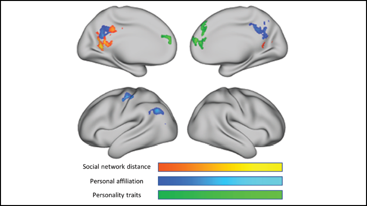 How the brain encodes social network structure