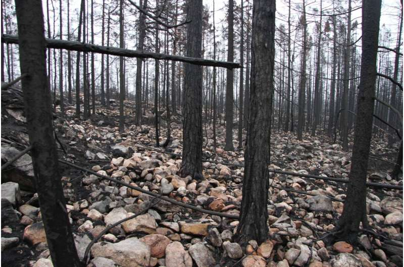 How the major Swedish forest fire of 2014 affected the ecosystem