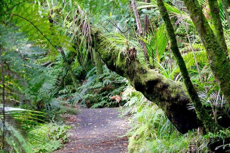 How to avoid harm to New Zealand's diverse native plants and animals