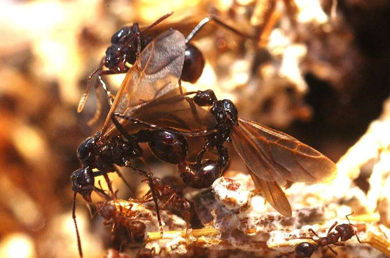 How to become 'ant-i-social'