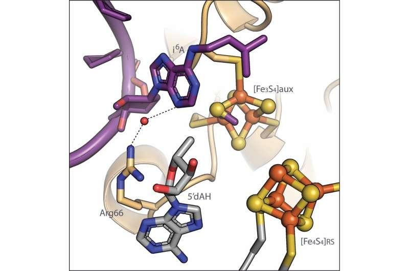 How to modify RNA: Crucial steps for adding chemical tag to transfer RNA revealed