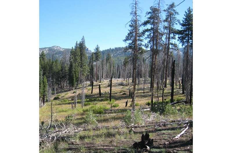 Cómo un incendio forestal restauró una cuenca hidrográfica de Yosemite