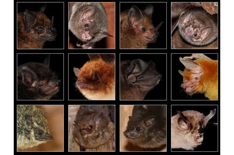 How and what do bats hear?