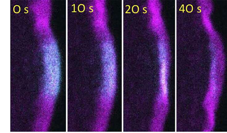 How cells recycle the machinery that drives their motility?