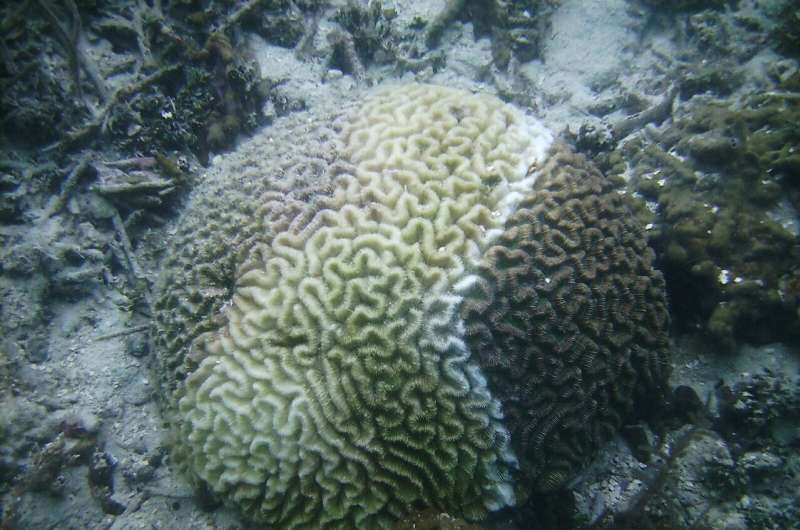 How did Florida fail to respond to a coral disease epizootic and what's to follow?
