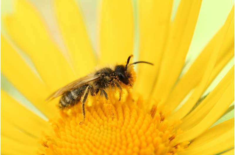 How does it feel to be a bee? The quest to understand animal sentience
