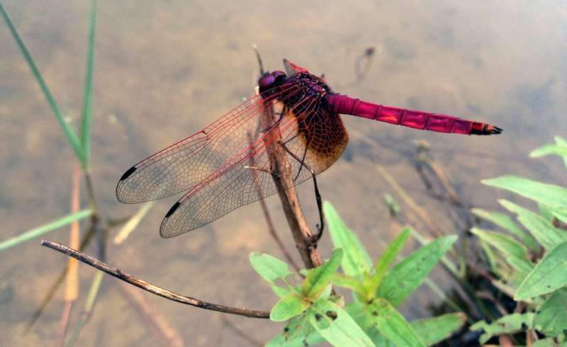 How insect wings withstands collisions