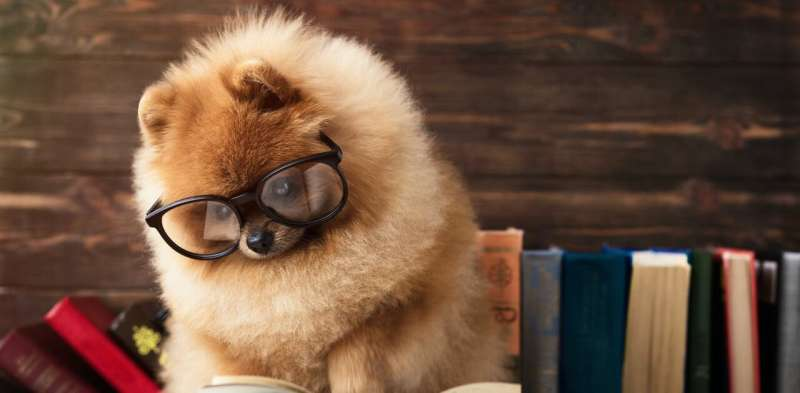How to tell if your dog is a genius