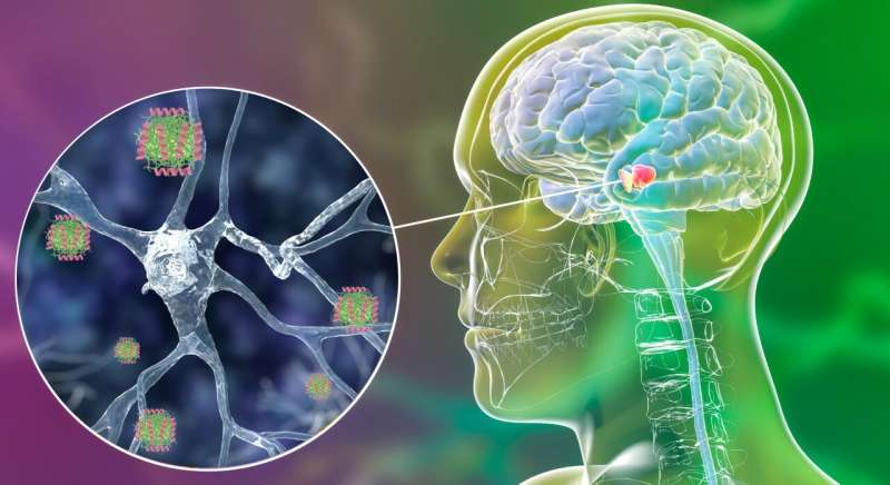 Human molecule blocking toxic forms of Parkinson's-related protein identified