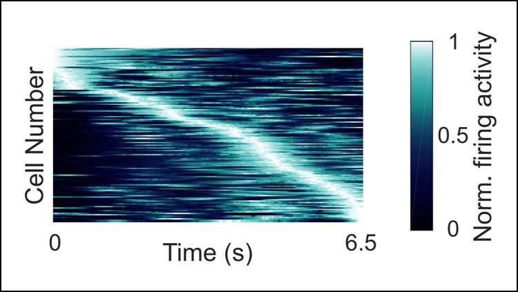 Human 'time neurons' encode specific moments in time