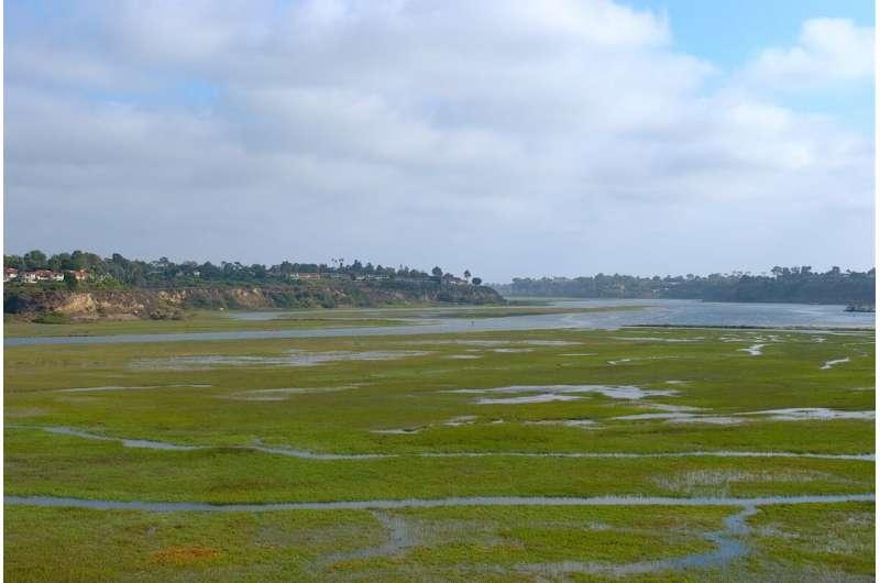 Human wastewater feeding harmful algae blooms off of Southern California's coast