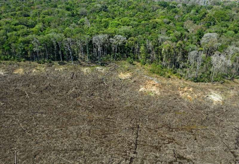 Humanity cannot afford the continuing destruction of the planet's tropical forests, which absorb and store vast quantities of CO